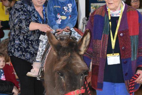 Staff helping student sit on a donkey